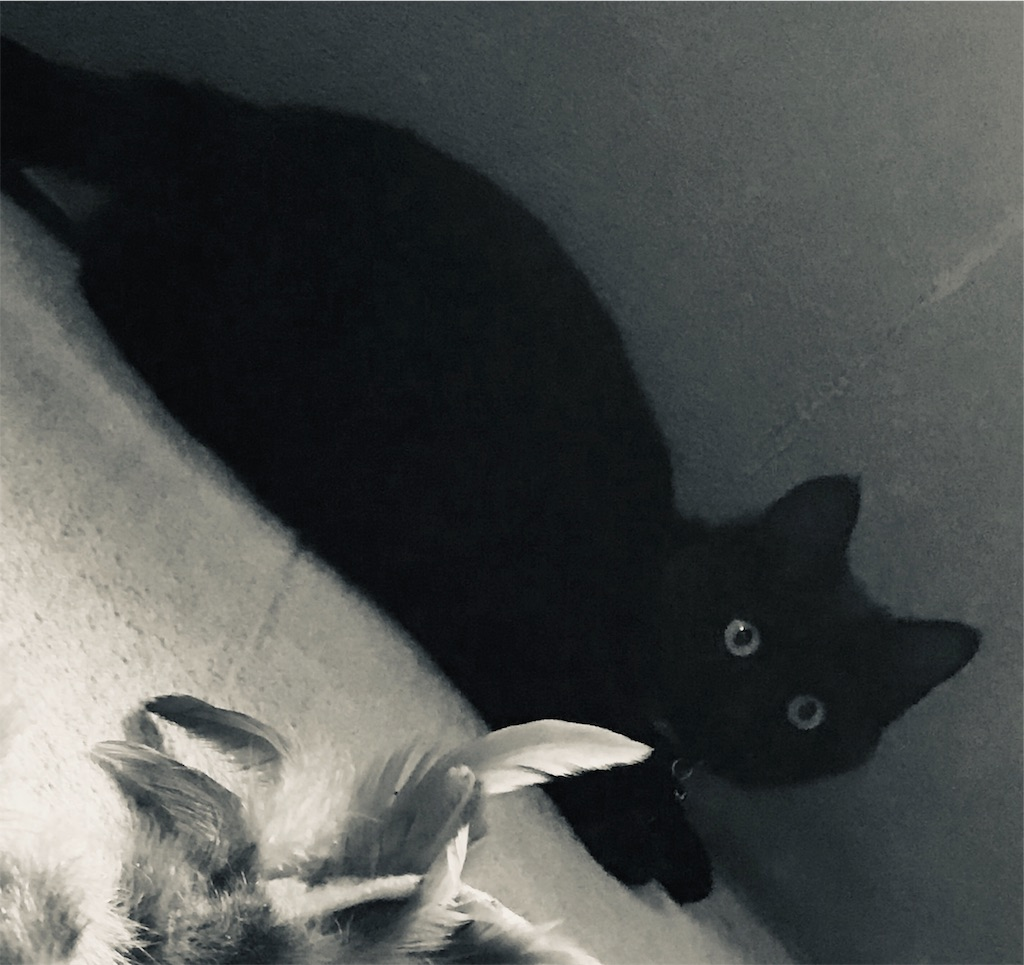 新入りの黒い子猫