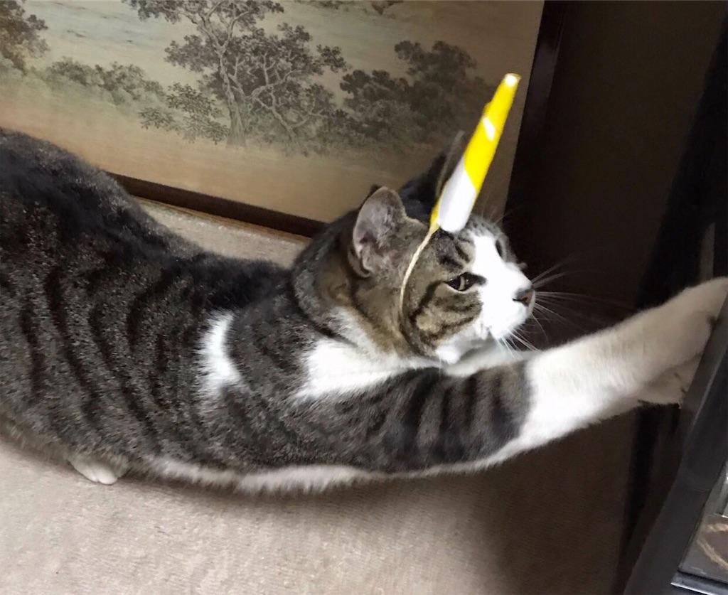 伸びをする鬼猫
