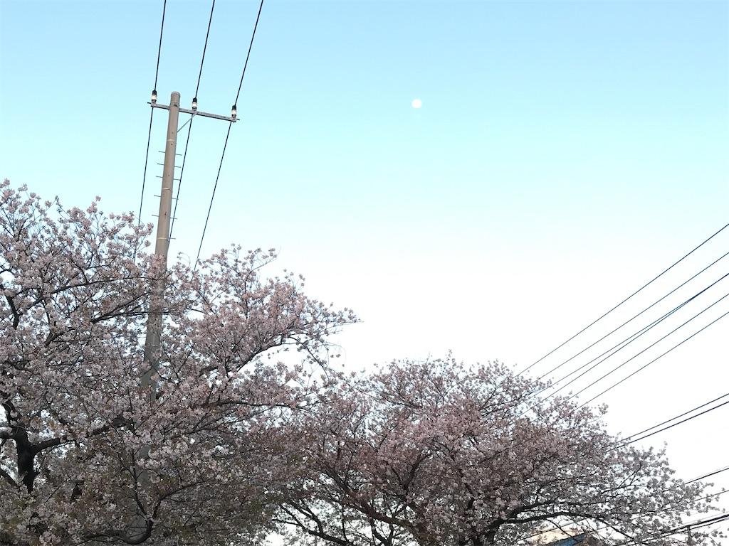 桜の上に登る月。