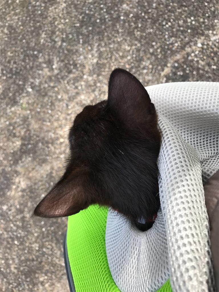 黒仔猫の後ろあたま。一本だけ白毛があるんです