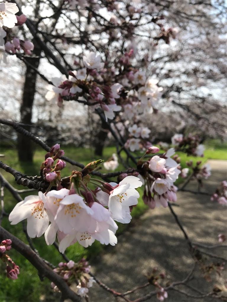 毎年桜を見れることが、こんなに楽しみだったなんて。