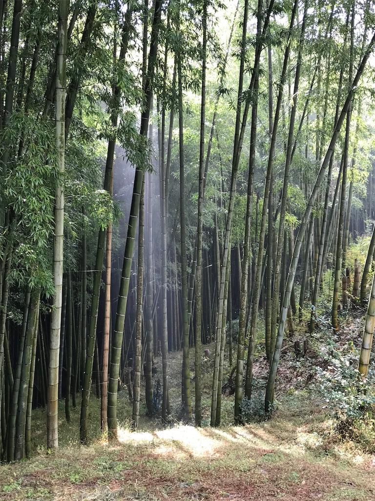 竹林に差し込む光の柱