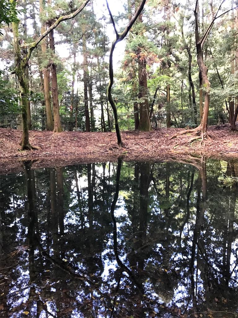 池に映る木々