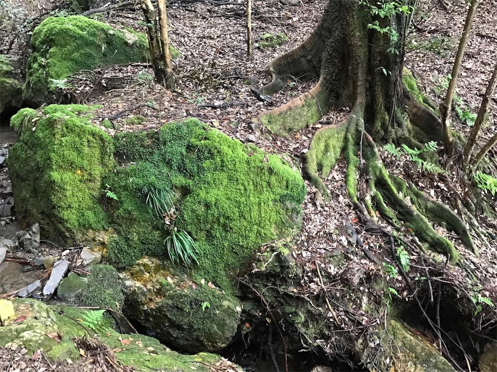 苔と木々としっとりと水を含んだ土と