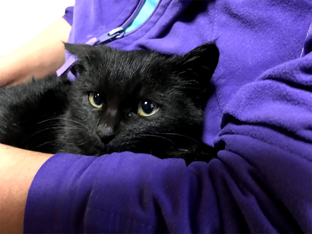 おびえる黒仔猫