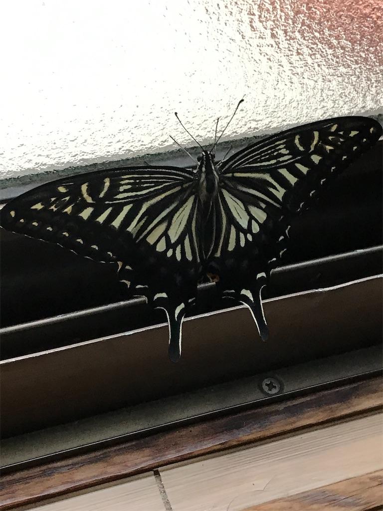 窓辺にパタパタ元気に羽ばたく蝶が・・・!!!