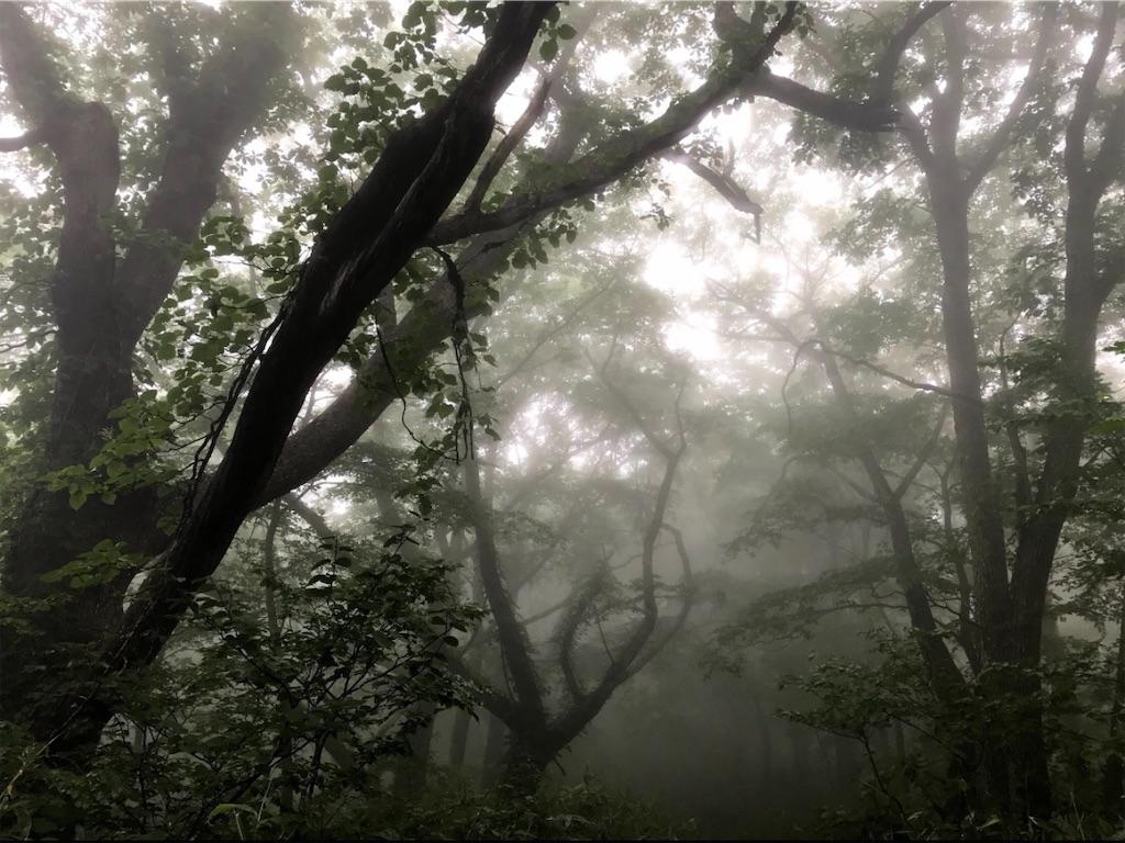 霧の中の樹林帯