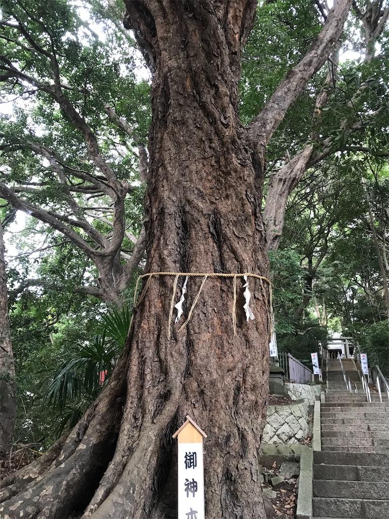 御神木の巨樹