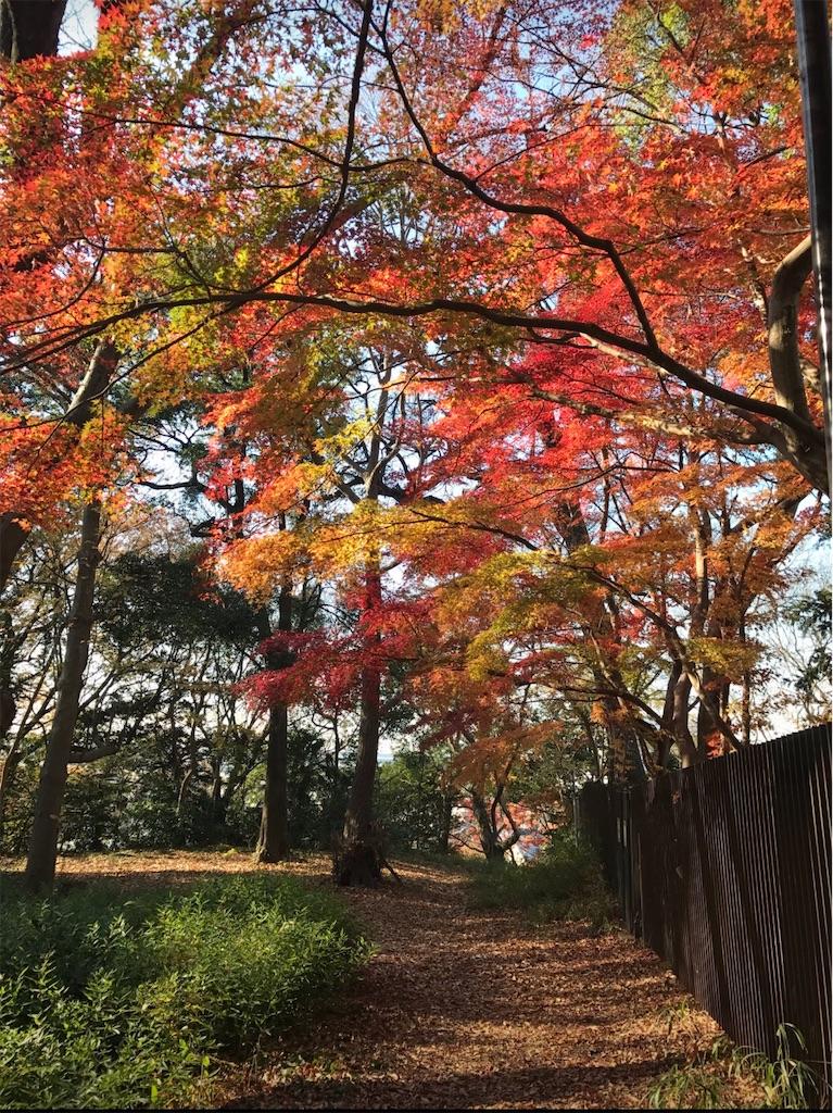11月の戸定邸のみごとな紅葉