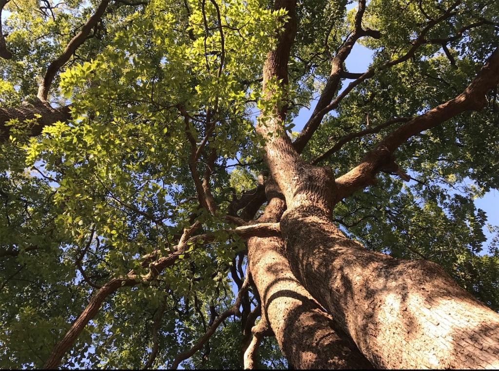 戸定邸の巨樹