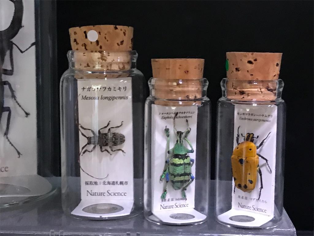 きれいな昆虫の瓶詰め