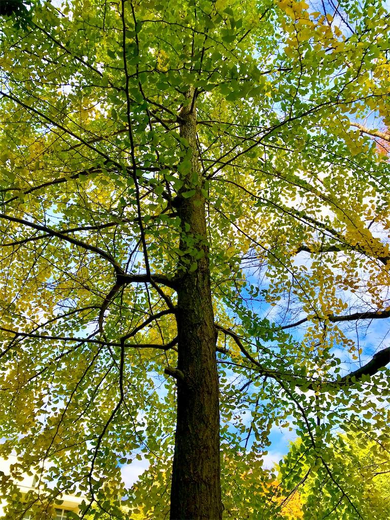 黄色い紅葉と青い空