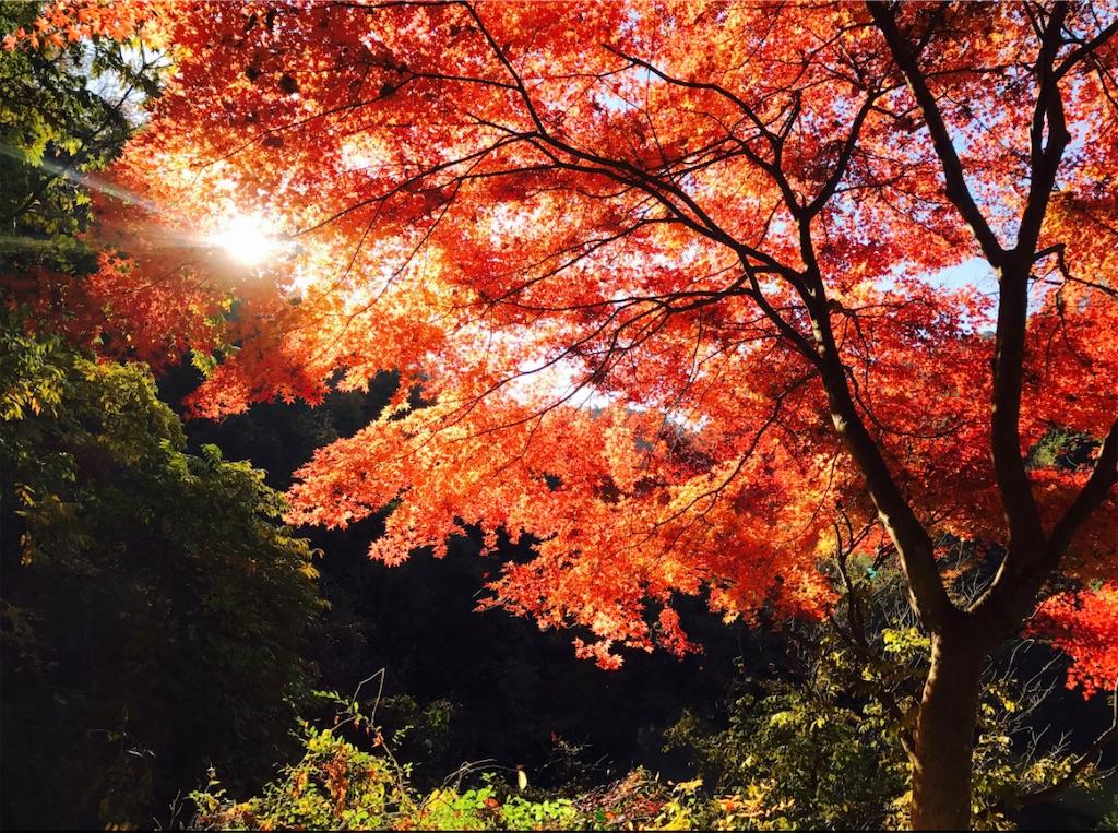 今年最高の紅葉
