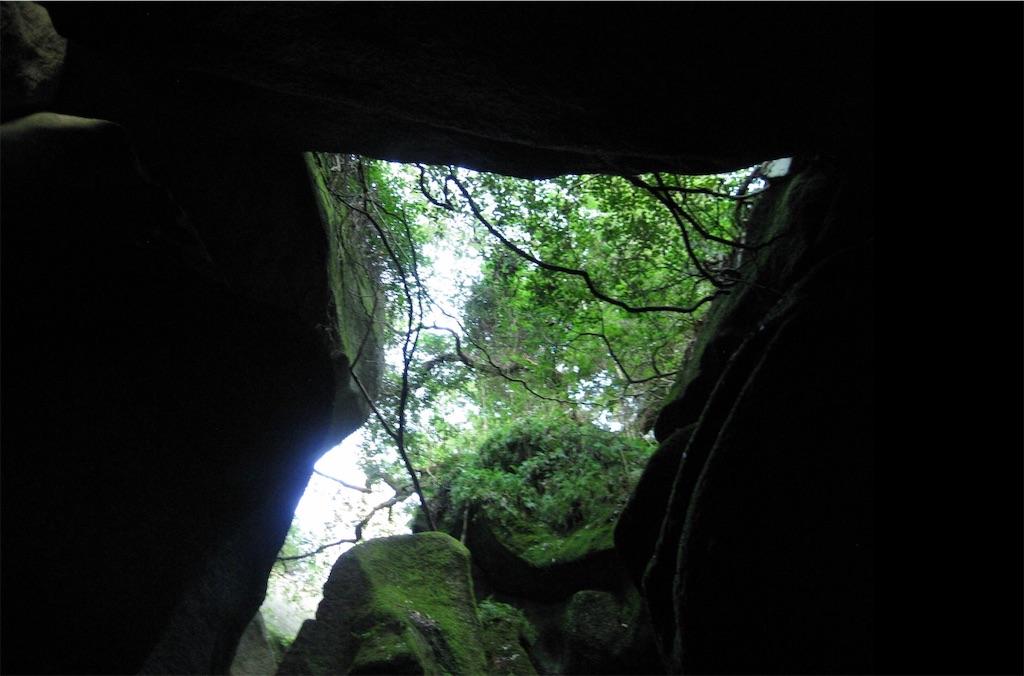 岩の間からこぼれる緑