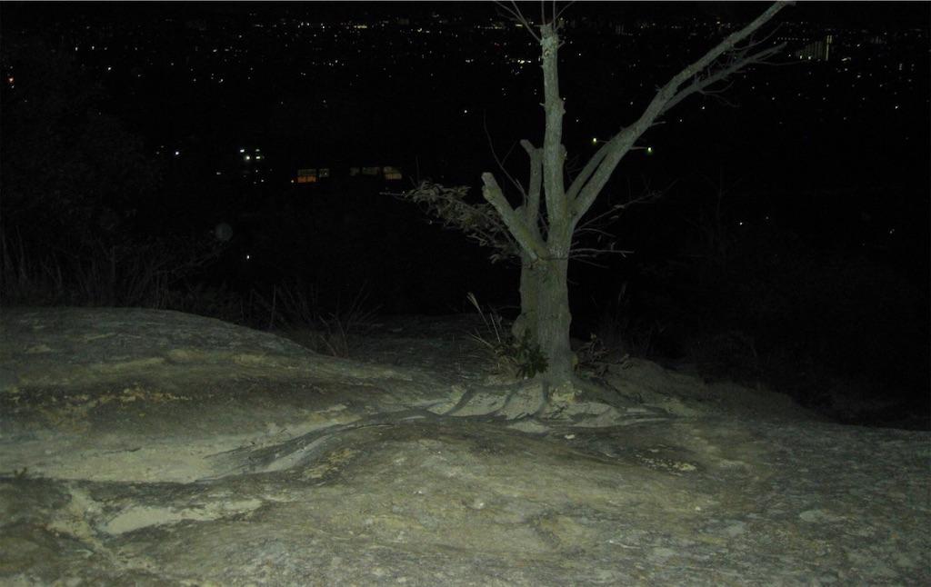 土のない岩の上に立つ木