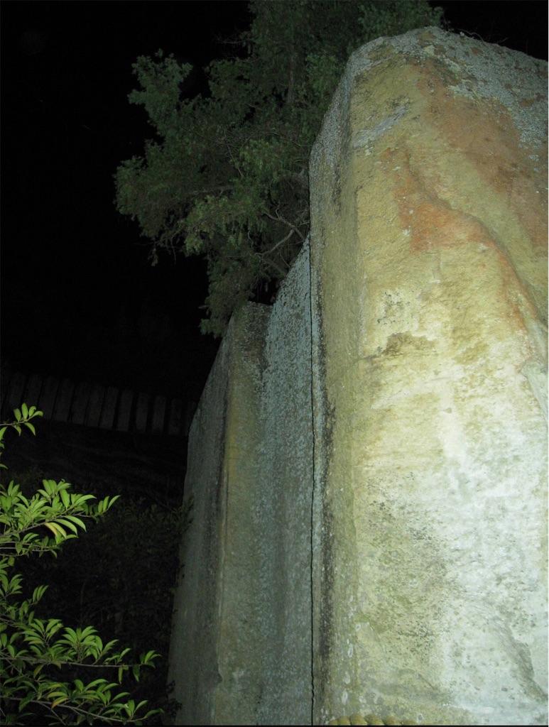 浮石の上には立派な木が生えています