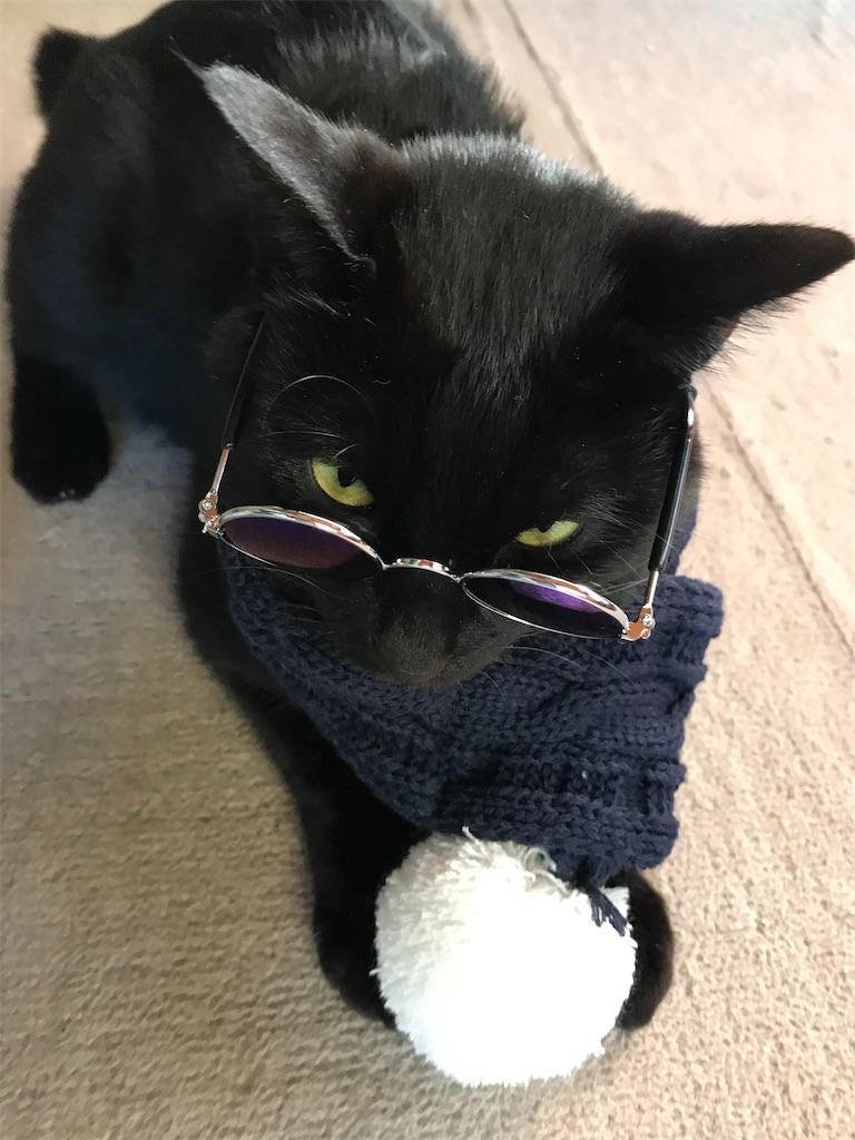 黒猫にサングラスとマフラー