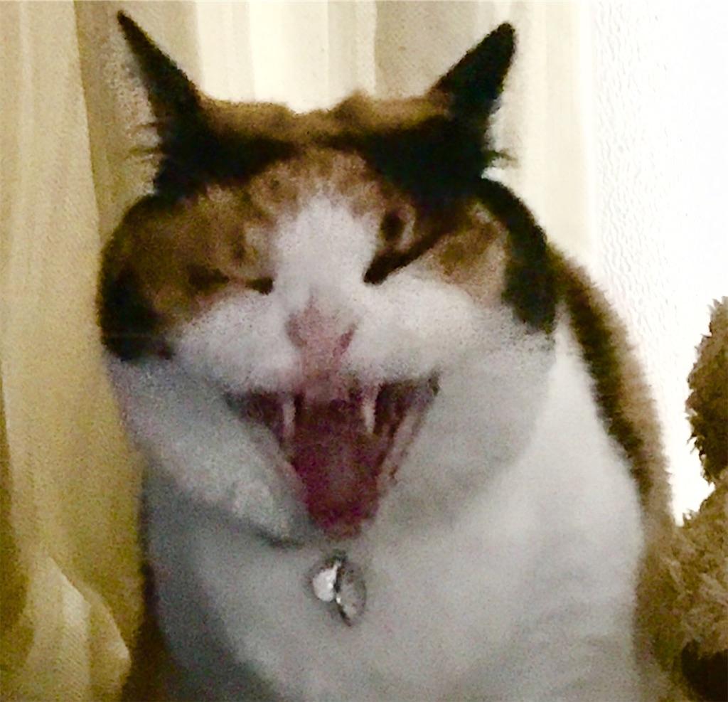 その猫、凶暴につき。