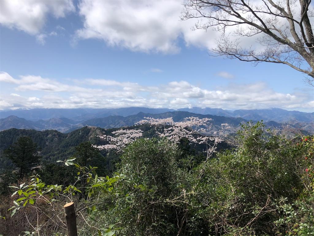 山嶺から見る桜