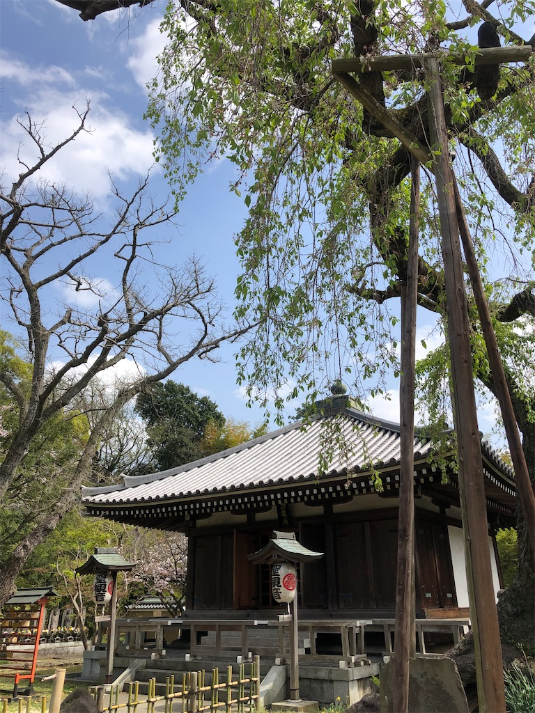樹齢320年と言われるエドヒガンのしだれ桜