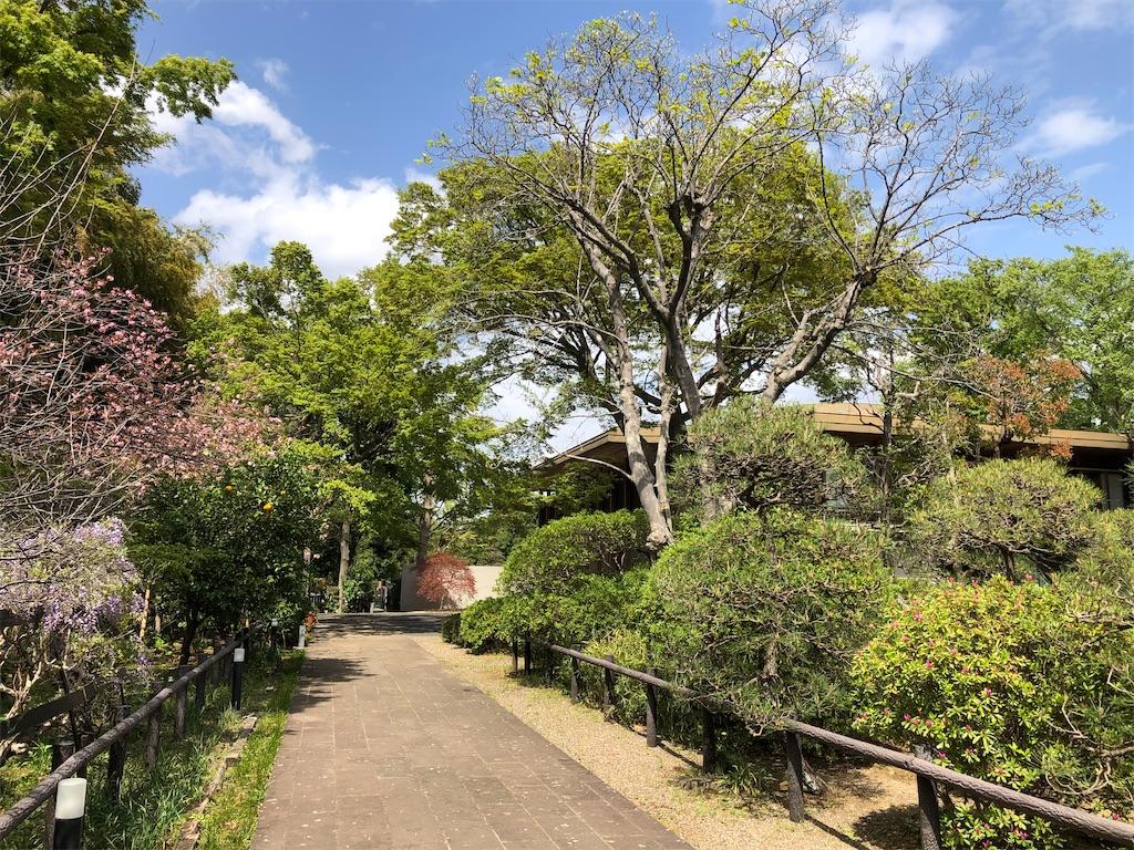 藤と桜の花咲く参道