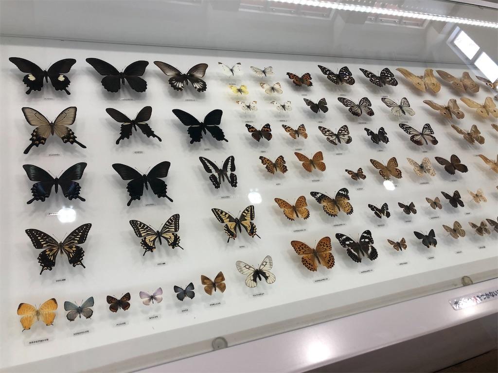 美しい展翅標本