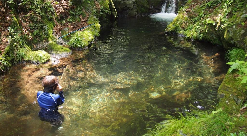 ホタルの棲む綺麗な水