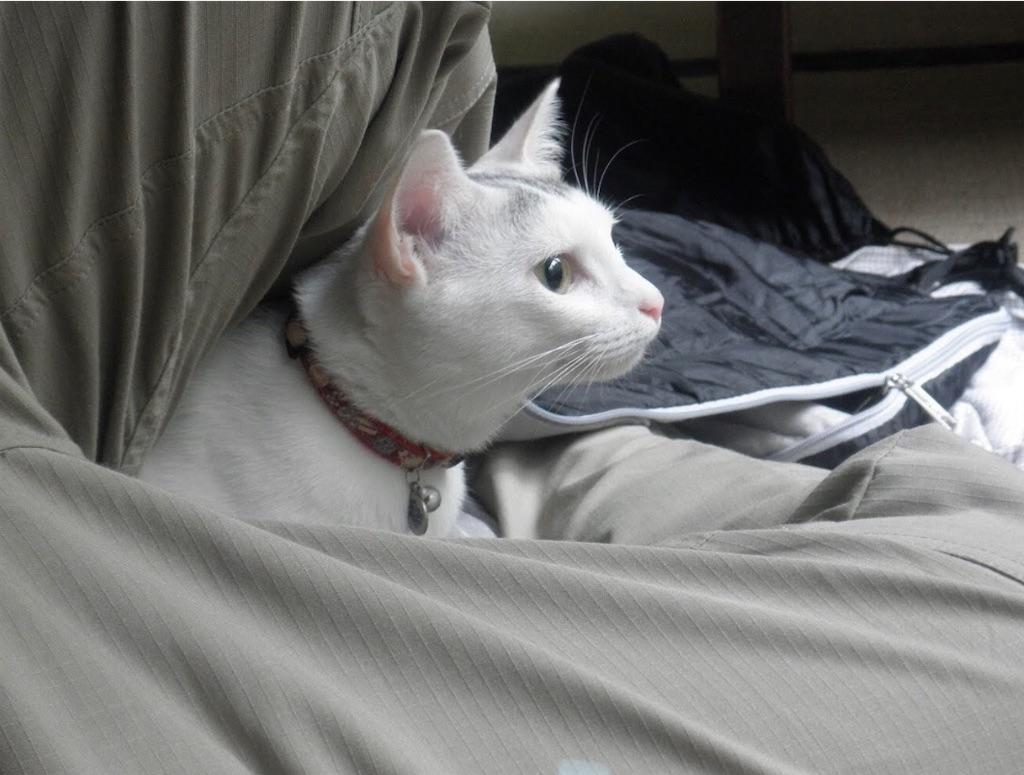 翌朝のお猫さま