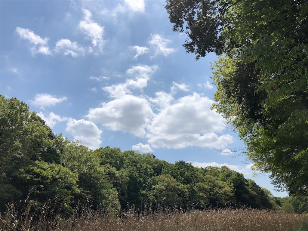青空と谷地