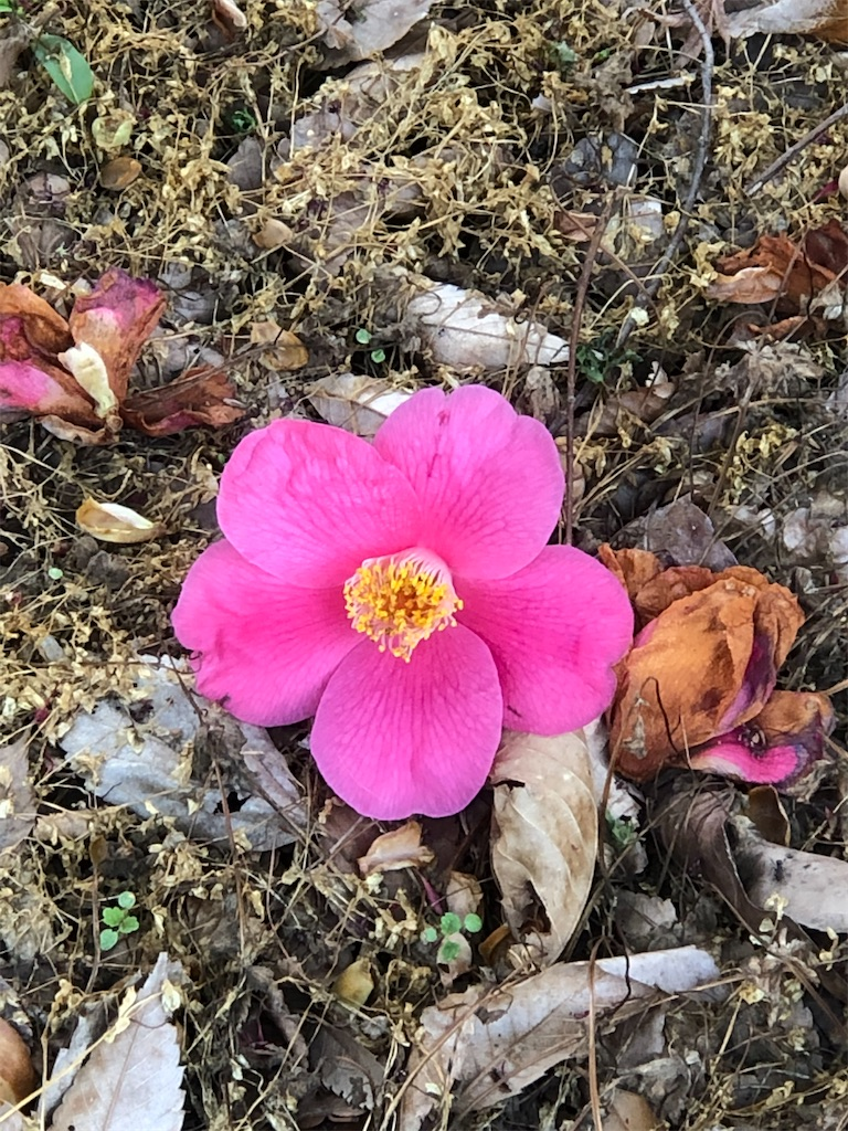 椿の花も。