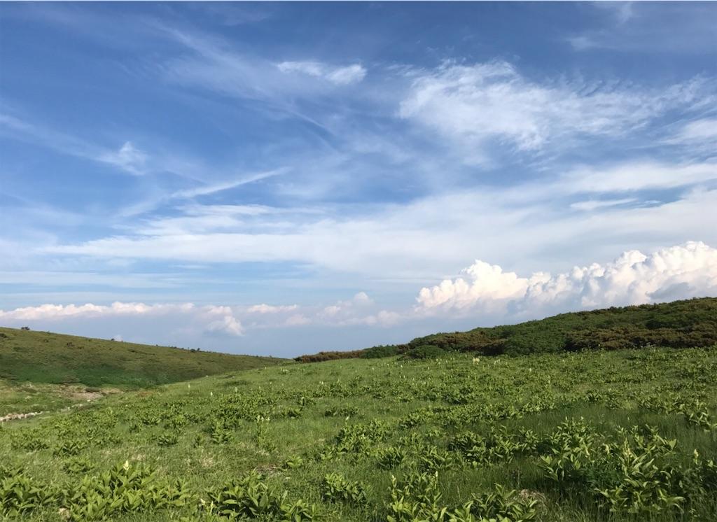 どこまでも続くお花畑と青い空に白い雲。