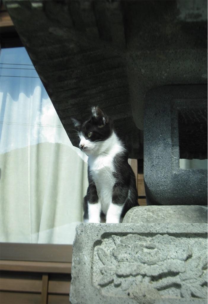 榛名神社の灯篭にゃんこ