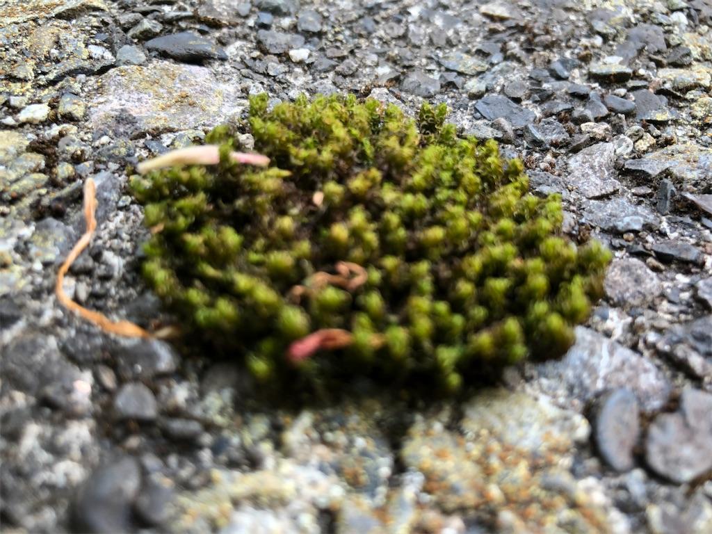小さな苔のドーム