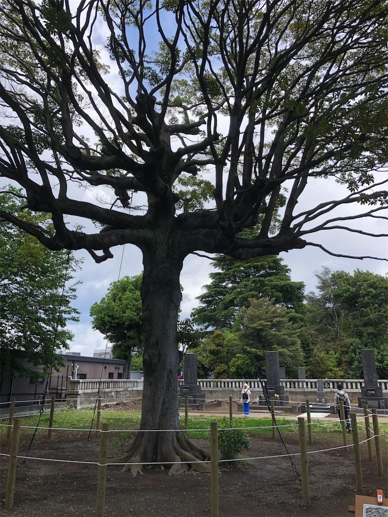 渋沢栄一氏の墓