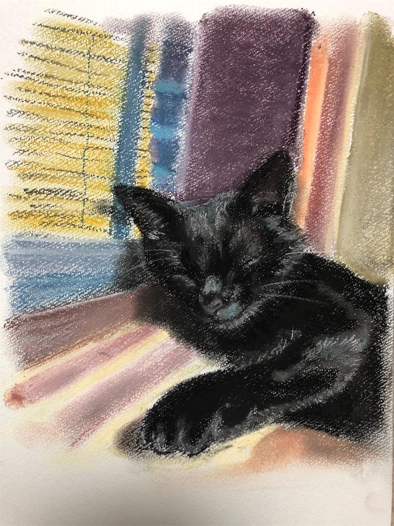 夕方の窓辺の黒猫。