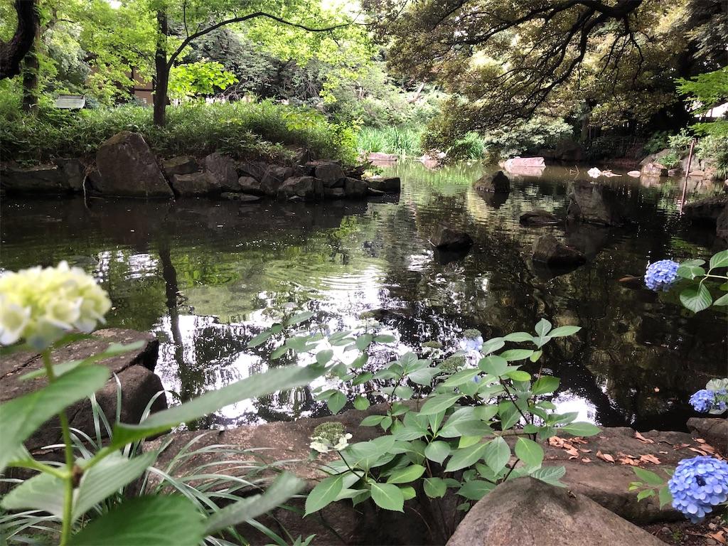 入ってすぐに、紫陽花の咲く大きな池が。