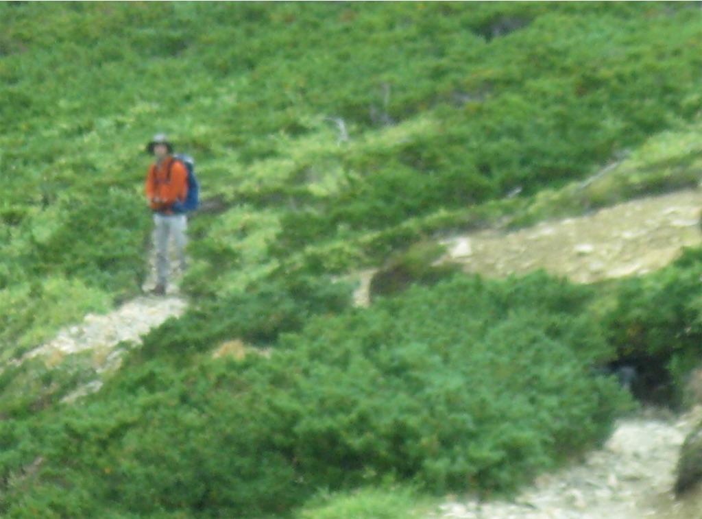 登ってくる登山者のすぐそばにクマ!
