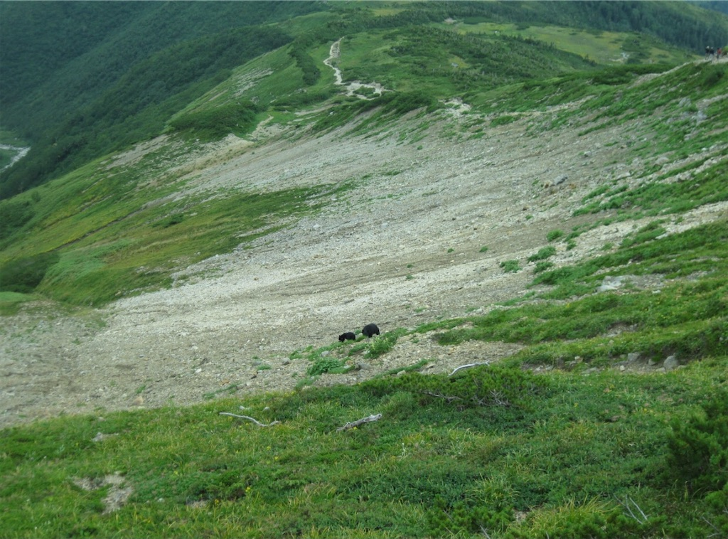 登山道の下をずっと移動しながら一生懸命食べる。