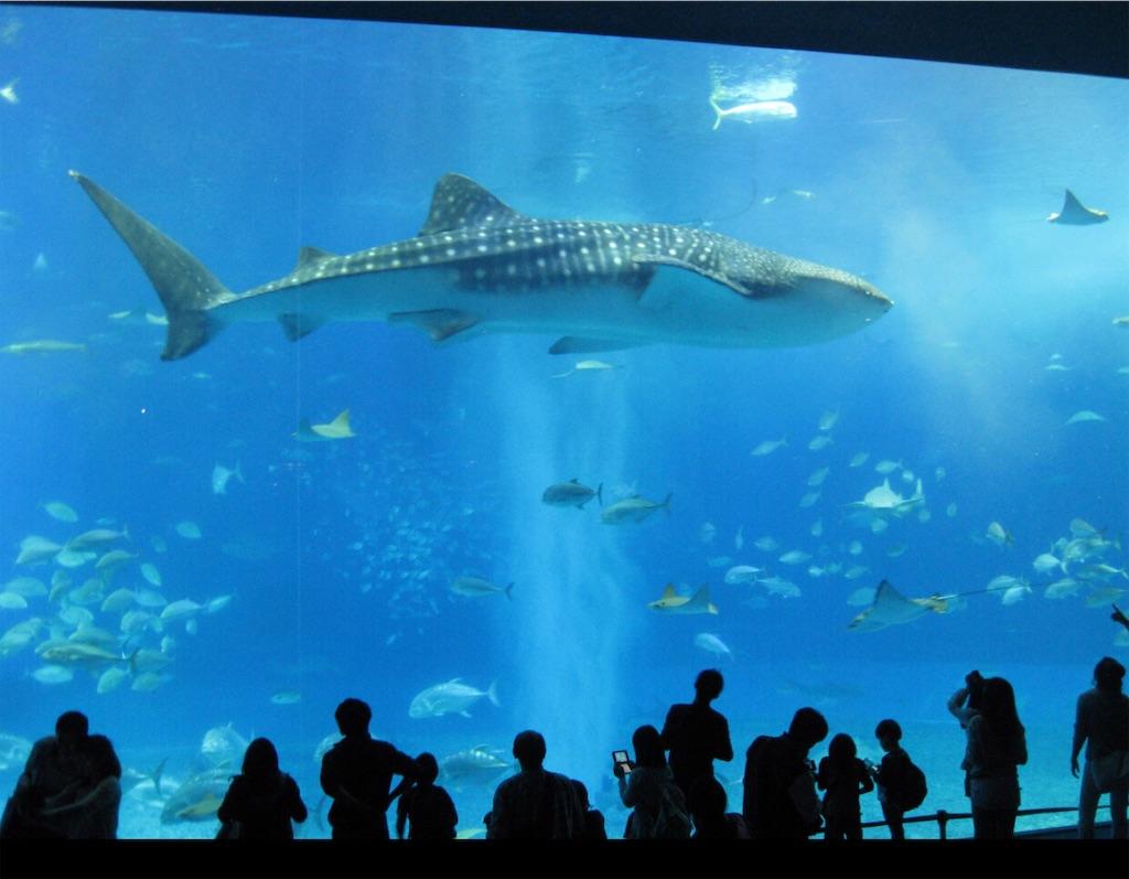 美ら海水族館。