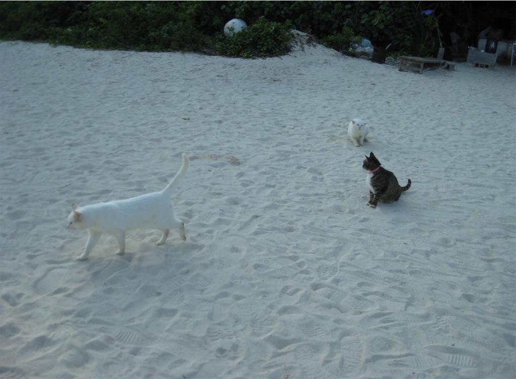 コンドイ浜の猫たち