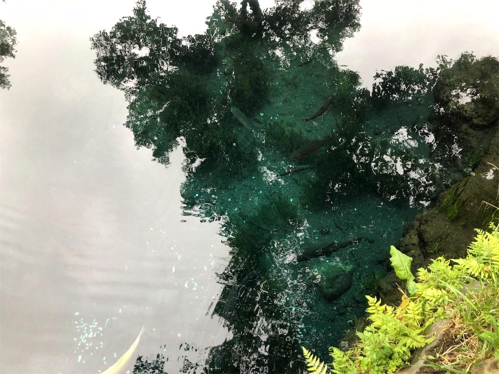湧池の美しい湧水