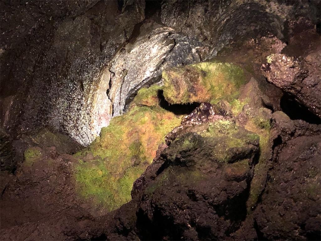 富岳風穴最深部のヒカリゴケ