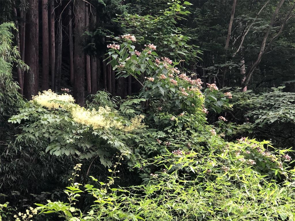 夏の山の花