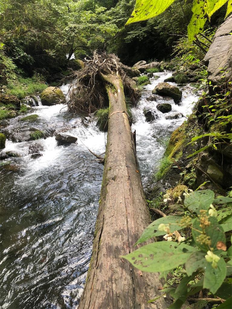 ここも相当な増水したことが伺える大きな流木