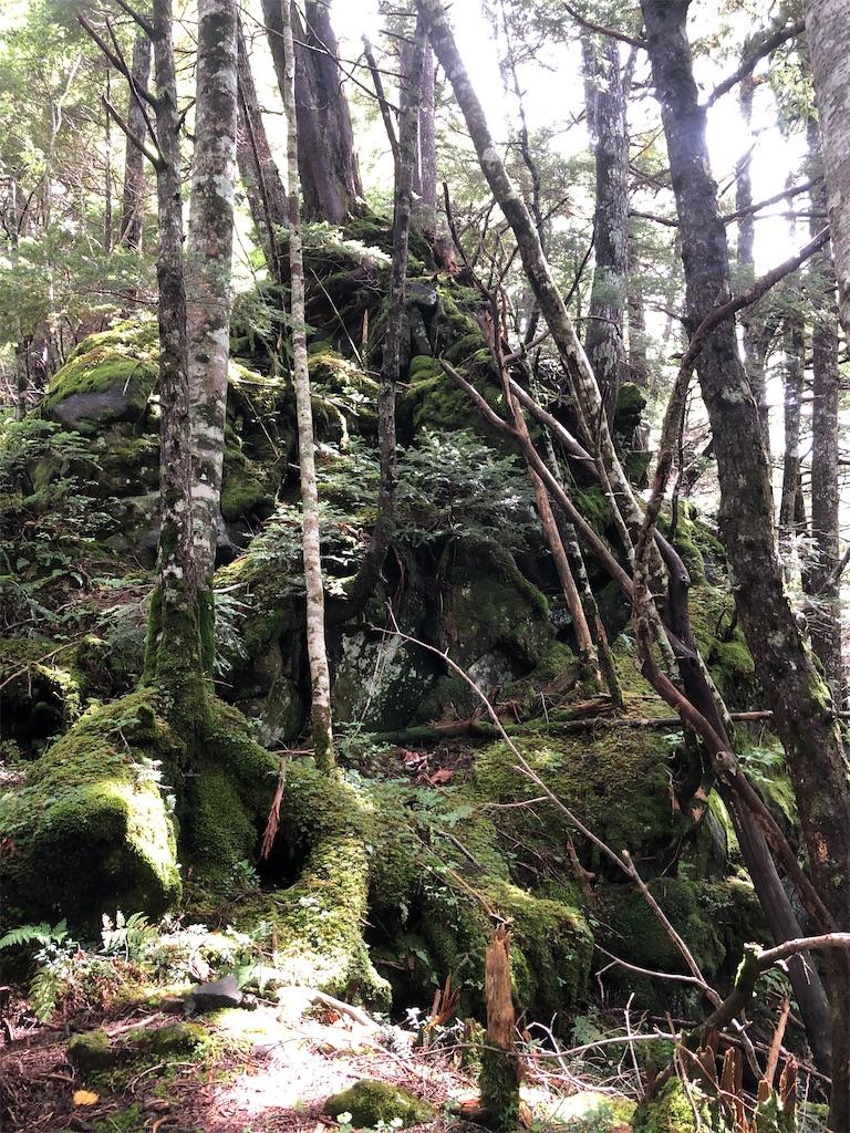 御嶽山は、とても古くて深い森を持つ。