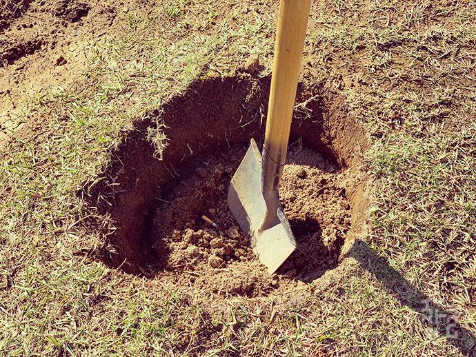 概ね根鉢の2倍程度のお大きさに穴を掘ります