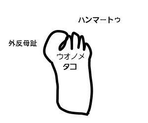 f:id:nekowamegusuri163:20181013104618j:plain