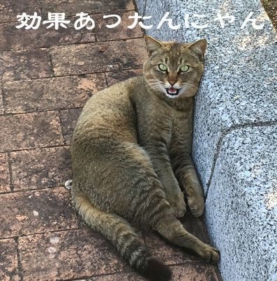 f:id:nekowamegusuri163:20181116135818j:plain