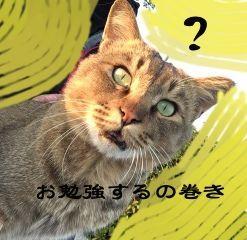 f:id:nekowamegusuri163:20181119140519j:plain