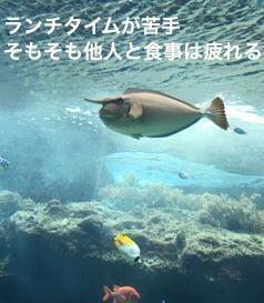 f:id:nekowamegusuri163:20181206095020j:plain